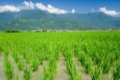 Asian beautiful farm with mountain far away Royalty Free Stock Photo