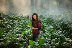 Asian beautiful girl are harvested tobacco in a tobacco farm diameter. stock photo