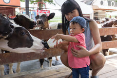 Asian beautiful mother is take care your cute new born baby feed. Ing milk for baby cow in the farm, Activities family to enhance the learning experience of Stock Photo