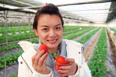 Asian beautiful tourist woman wearing overcoat in strawberry greenhouse Royalty Free Stock Images