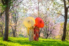 Asian beautiful woman wearing traditional japanese kimono and cherry blossom in spring, Japan stock photo