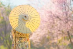 Asian beautiful woman wearing traditional japanese kimono and cherry blossom in spring, Japan royalty free stock photo