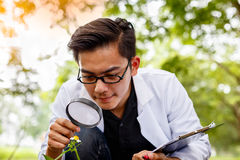 Asian biotechnology scientist working examining plants at forest. Park Stock Images
