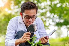 Asian biotechnology scientist working examining plants at forest. Park Royalty Free Stock Photo