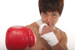 Asian boxer Royalty Free Stock Photography
