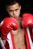 Asian Boxer Stock Images