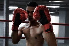 Asian boxer in the ring royalty free stock photos