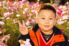 Asian boy Royalty Free Stock Image