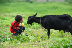 Asian boy and black goat Royalty Free Stock Images