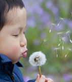 Asian boy blowing dandelion. In the park Stock Image