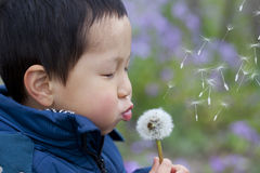Asian boy blowing dandelion. In the park Royalty Free Stock Photo