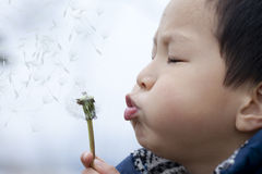 Asian boy blowing dandelion Stock Image