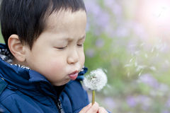 Asian boy blowing dandelion Royalty Free Stock Photos