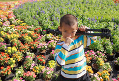 Asian boy carrying tripods standing in flower garden. Asian boy carrying tripods standing in a flower garden Royalty Free Stock Images