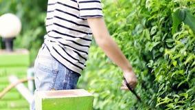 Asian boy cuts off green leaf tree in the garden . stock footage