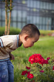Asian boy and flowers Royalty Free Stock Photo