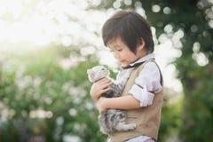 Asian boy  holding american short hair  kitten Royalty Free Stock Photo