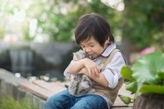 Asian boy  holding american short hair  kitten Stock Photos