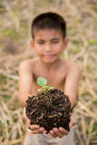 Asian boy holding  seedling plant Royalty Free Stock Photo