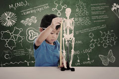 Asian kid measuring human skeleton model. Asian boy learns biology isolated on white Royalty Free Stock Photo