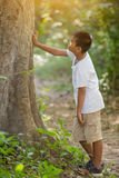 Asian boy look at the tree Stock Image