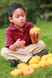 Asian boy with mini pumpkins Royalty Free Stock Images