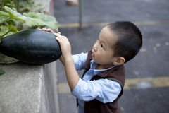 Asian boy picking up green pumpkin Stock Image