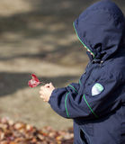 Asian boy picking up red leaf Royalty Free Stock Image