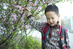 Asian boy standing beside the flower tree Royalty Free Stock Photography