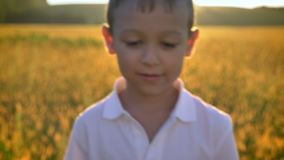 Asian boy is walking in field in summer in daytime, touching crops, nature concept stock video