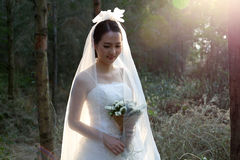 Asian bride wearing bridal gown standing in the pine forest Stock Image