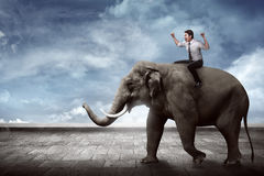 Asian business man riding elephant. Sit on it back royalty free stock photos