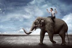 Asian business man riding elephant Royalty Free Stock Photos