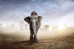 Asian business man riding elephant Stock Photo