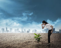 Asian business woman looking down the plant seed grow on the des Stock Images
