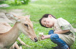 Asian child feeding deer Royalty Free Stock Photos