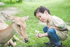 Asian child feeding deer. Cute Asian child feeding deer Stock Photos