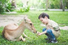 Asian child feeding deer. Cute Asian child feeding deer Stock Photo