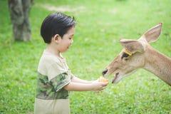 Asian child feeding deer. Cute Asian child feeding deer Stock Image