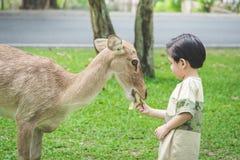 Asian child feeding deer. Cute Asian child feeding deer Stock Images
