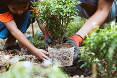 Asian child girl helping her father to plant the young tree royalty free stock image