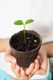 Asian Child hands holding lemon seedling Royalty Free Stock Images