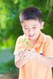 Asian child holding young seedling plant in hands, in garden, on Royalty Free Stock Image