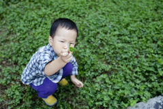 Asian child picking green leaf in the garden Stock Photo