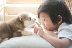 Asian child playing with siberian husky puppy Stock Photos