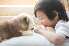 Asian child playing with siberian husky puppy Royalty Free Stock Photo