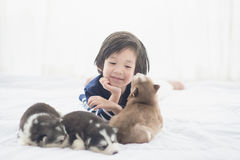 Asian child and siberian husky puppies lying Royalty Free Stock Photography