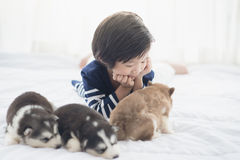 Asian child and siberian husky puppies lying Stock Images