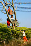 Asian children, active kid, outdoor activity. DA LAT, VIET NAM- JAN 24: Group of Asian children with outdoor activity, Vietnamese boy climbing to tree at tea Stock Photo