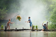 Asian children farmer on rice cross the wood bridge before the g. Rown in paddy field stock image